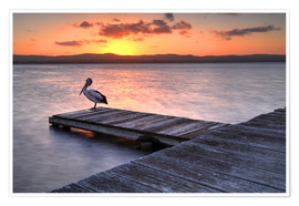 Premium poster  A pelican resting on the lake Tuggerah