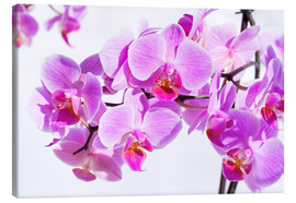 Canvas  Beautiful pink-magenta orchid