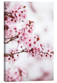 Canvas print  flowering fruit tree