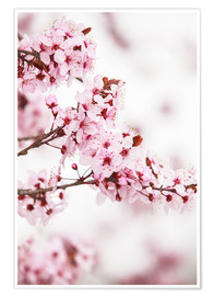 Premium poster  flowering fruit tree