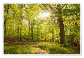 Premium poster  Spring forest with sunshine - Oliver Henze