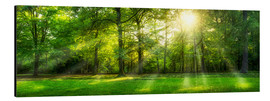 Alu-Dibond  Forest panorama in summer - Jan Christopher Becke