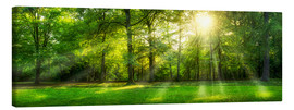 Canvas print  Forest panorama in summer - Jan Christopher Becke