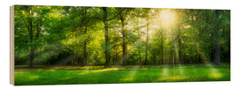 Wood  Forest panorama in summer - Jan Christopher Becke