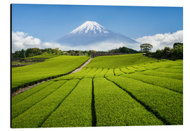 Alu-Dibond  Tea field in Japan with Mount Fuji - Jan Christopher Becke