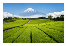 Premium poster  Tea field in Japan with Mount Fuji - Jan Christopher Becke