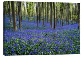 Canvas print  Hallerbos Forest during Spring - Andreas Wonisch