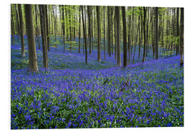 Foam board print  Hallerbos Forest during Spring - Andreas Wonisch
