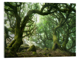 Acrylic print  Fairy Tale Forest with Laurel Trees on Madeira - Andreas Wonisch