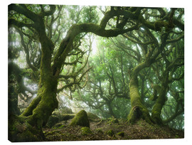 Canvas print  Fairy Tale Forest with Laurel Trees on Madeira - Andreas Wonisch