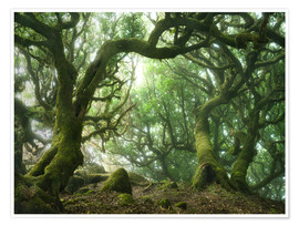 Poster  Fairy Tale Forest with Laurel Trees on Madeira - Andreas Wonisch