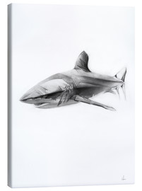 Canvas print  Shark I - Alexis Marcou