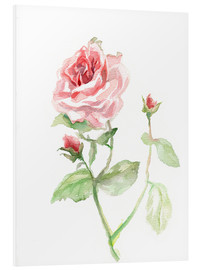 Foam board print  Pink rose - Verbrugge Watercolor