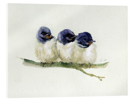 Acrylic glass  3 little swallows - Verbrugge Watercolor