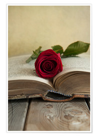 Premium poster Red rose and old open book
