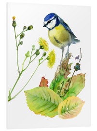 Foam board print  Blue Tit Bird and Sowthistle - Verbrugge Watercolor
