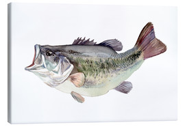 Canvas print  Bass fish painting - Verbrugge Watercolor