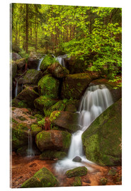 Acrylic print  Waterfall in the forest - Thomas Herzog