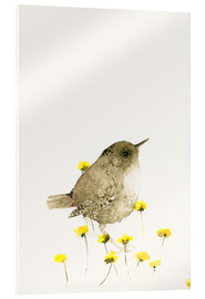 Acrylic print  Wren amongst yellow flowers - Dearpumpernickel