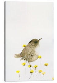Canvas print  Wren amongst yellow flowers - Dearpumpernickel
