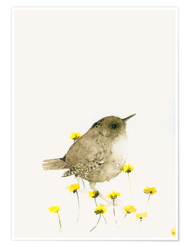 Premium poster Wren amongst yellow flowers