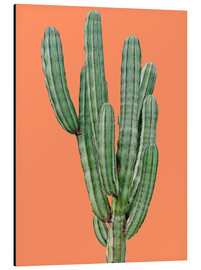Aluminium print  Cactus in Orange - Finlay and Noa