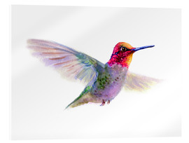Acrylic print  Hummingbird - Verbrugge Watercolor
