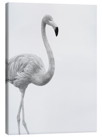 Canvas print  Black and white flamingo - Finlay and Noa
