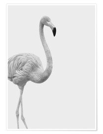 Premium poster Black and white flamingo