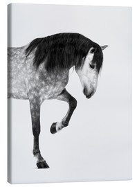 Canvas print  From the high horse - Finlay and Noa