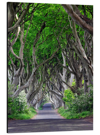 Aluminium print  Dark Hedges in Ireland - Dieter Meyrl
