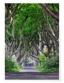 Premium poster Dark Hedges in Ireland