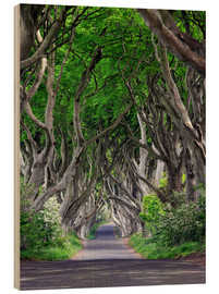 Wood print  Dark Hedges in Ireland - Dieter Meyrl