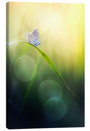 Canvas print  Born with wings - Bob Daalder