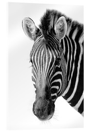 Acrylic glass  Zebra - Denis Feiner