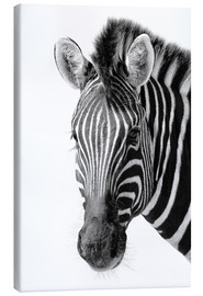 Canvas print  Zebra - Denis Feiner