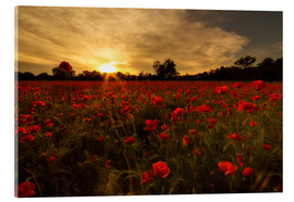 Acrylic glass  Poppy field in sunset - Filtergrafia