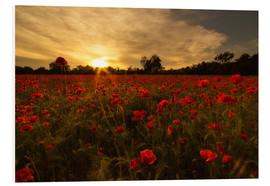 Foam board print  Poppy field in sunset - Filtergrafia