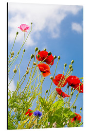 Alu-Dibond  Poppies into the sky - Edith Albuschat