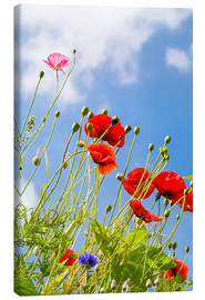 Canvas print  Poppies into the sky - Edith Albuschat
