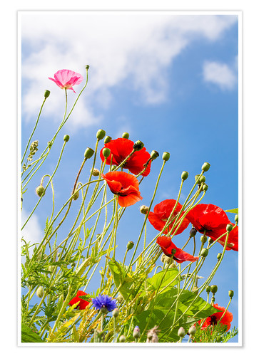 Premium poster Poppies into the sky