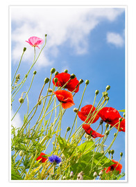Premium poster  Poppies into the sky - Edith Albuschat