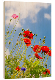 Wood print  Poppies into the sky - Edith Albuschat