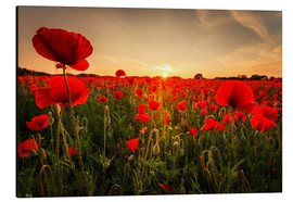 Aluminium print  Poppy field with sunset - Oliver Henze