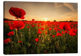 Canvas print  Poppy field with sunset - Oliver Henze