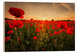 Wood print  Poppy field with sunset - Oliver Henze