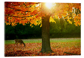 Acrylic print  Fall Season in the Park