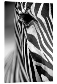 Acrylic glass  face of a Grevy's zebra