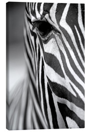 Canvas print  Face of a zebra