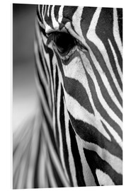Foam board print  Face of a zebra